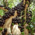 Plantação de mudas frutíferas