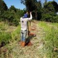 Projeto plantio de arvores nativas