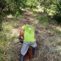 Projeto de reflorestamento ambiental